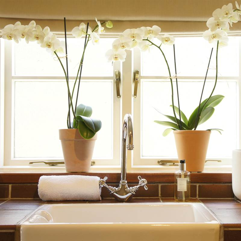 Orchids in bathroom at the old post office at the walnut tree